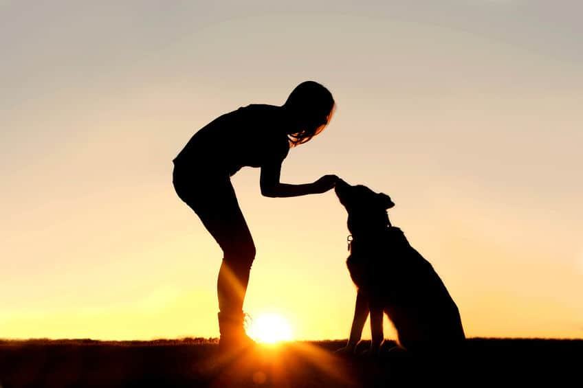 silhouette of a woman feeding a dog a treat with a sunset in the background